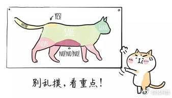 大头宝宝面霜护肤品中的激素是什么?插图(3)